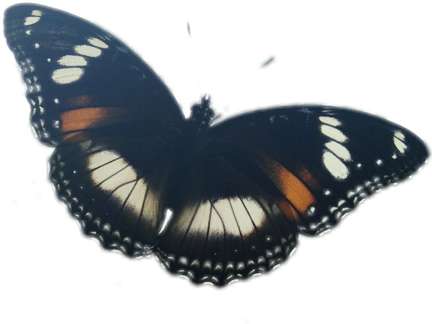 #FreeToEdit #gorgeous butterfly